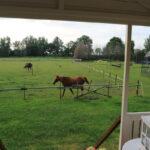 Pipowagen Jasmijn uitzicht paarden