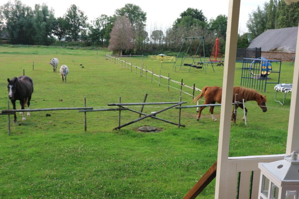 Kampeerhoeve paarden speeltuin weiland grasveld