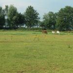 Kampeerhoeve weiland paarden