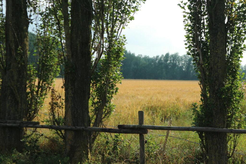 Kampeerhoeve weiland uitzicht